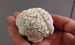 3D печать в обучении нейрохирургов