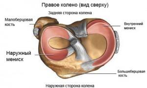 мениск колена рисунок